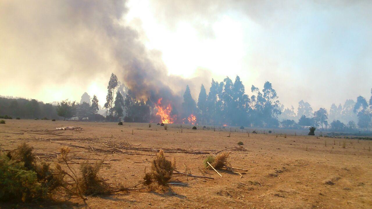 Con Maquinaria Pesada Municipal  Bomberos Pitrufquén, Gorbea, Freire Combaten Incendio Forestal Afecta Al Sector Rural De Filoco