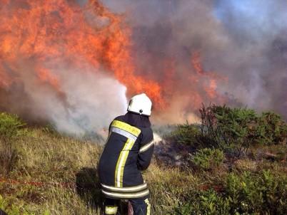 ONEMI Convocó De Urgencia A Una Mesa Técnica De Incendios Forestales Por Siniestros Que Afectan A Malleco