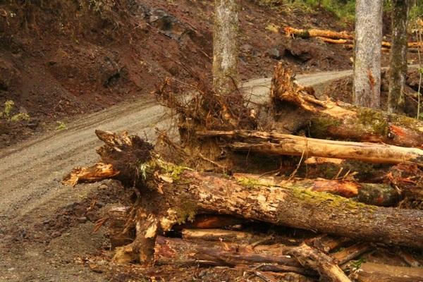 Acogen Recurso de Protección por Tala Árboles Nativos en Pucón