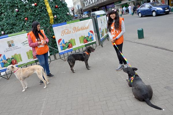 Municipalidad de Temuco continúa con campaña de adopción canina