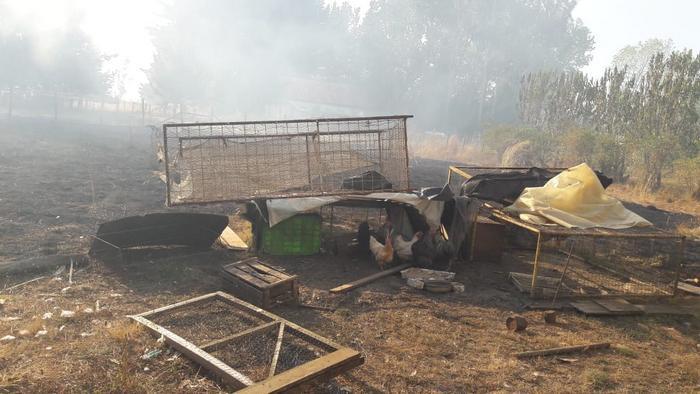 Conaf Informa Que Incendio Forestal De Pitrufquen Está Contenido