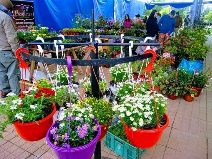 Nueva Versión De Expo-Flores Villarrica 2020 Abrirá Este Fin De Semana