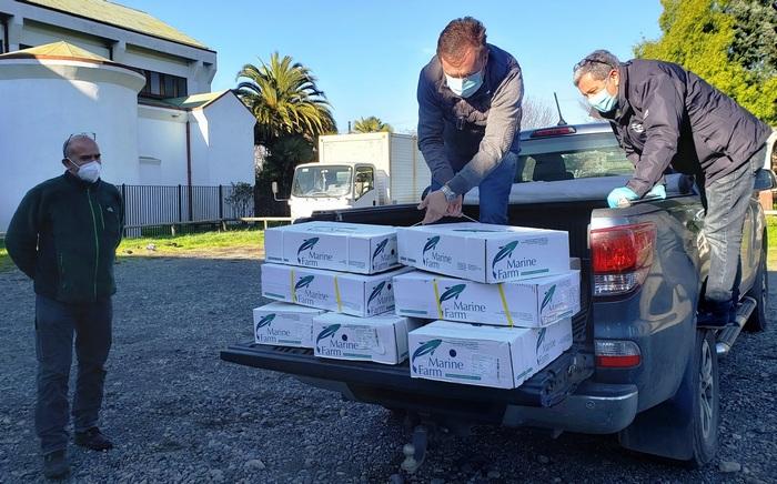 Comedores De Villarrica Reciben 300 Kilos De Salmón