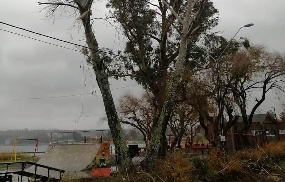 Continúan Trabajos de Podas de Árboles en Villarrica