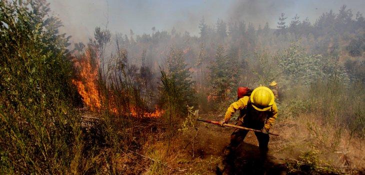 Onemi Cancela Alerta Roja Por Incendio Forestal en Angol